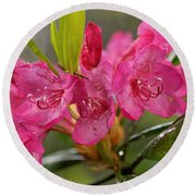 Close-up Of Pink Horatio Flowers Round Beach Towel