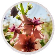 Close-up Of Pink Mullein Flowers Round Beach Towel