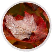 Close-up Of Raindrops On Maple Leaves Round Beach Towel