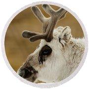 Close-up Of Reindeer Head On Snowy Ridge Round Beach Towel