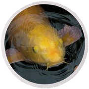 Close Up Of Single Large Yellow Koi Fish With Whiskers Round Beach Towel