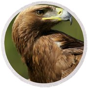 Close-up Of Sunlit Golden Eagle Looking Back Round Beach Towel