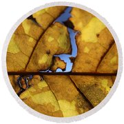 Close Up Of Yellow Leaf Round Beach Towel