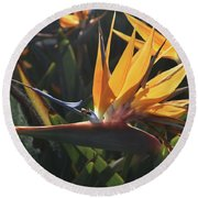 Close Up Photo Of A Bee On A Bird Of Paradise Flower  Round Beach Towel