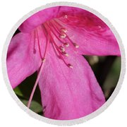 Close Up Pink Lily Round Beach Towel