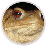 Close Up Portrait Of A Common Toad Round Beach Towel