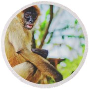 Close-up Portrait Of A Nicaraguan Spider Monkey Sitting And Looking At The Camera Round Beach Towel