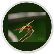Close Up Red Dragonfly Round Beach Towel