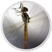 Close Up Shoot Of A Anisoptera Dragonfly Round Beach Towel