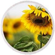 Close Up Single Sunflower In South Dakota Round Beach Towel