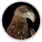 Close-up White-tailed Eagle, Birds Of Prey Isolated On Black Bac Round Beach Towel