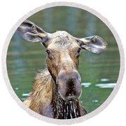 Close Wet Moose Round Beach Towel