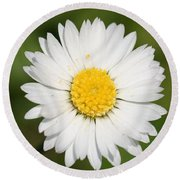 Closeup Of A Beautiful Yellow And White Daisy Flower Round Beach Towel