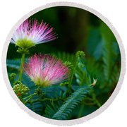 Closeup Of A Mimosa Bloom Round Beach Towel