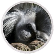 Closeup Of Black And White Angolian Primate Sleeping On Log Raft Round Beach Towel