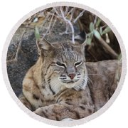 Closeup Of Bobcat Round Beach Towel