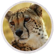 Closeup Of Cheetah Round Beach Towel
