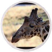 Closeup Of Giraffe Round Beach Towel