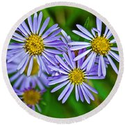 Closeup Of Leafy Bract Asters On Iron Creek Trail In Sawtooth National Wilderness Area-idaho  Round Beach Towel