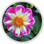 Closeup View Of A Dahlia That Was In The Cesky Krumlov Castle Gardens Round Beach Towel