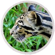 Clouded Leopard In The Grass Round Beach Towel