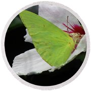 Cloudless Giant Sulphur Butterfly  Round Beach Towel