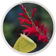 Cloudless Sulphur And Pineapple Sage Round Beach Towel
