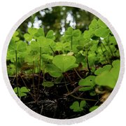 Clover In Montgomery Woods State Natural Reserve Round Beach Towel