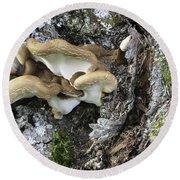 Cluster Of Fungi Round Beach Towel