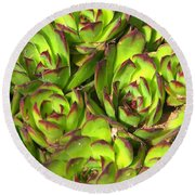 Clustered Succulents Round Beach Towel