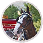Clydesdale At Esp Round Beach Towel