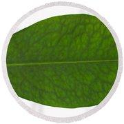 Coca Leaf, Erythroxylon Coca Round Beach Towel