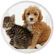 Cockapoo Puppy And Tabby Kitten Round Beach Towel