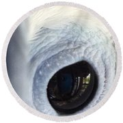 Cockatiel Eye Round Beach Towel