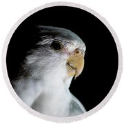 Cockatiel Round Beach Towel