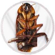 Cockroach Carcass Round Beach Towel