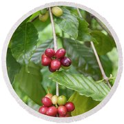Coffea Coffee Growing In The Balinese Countryside. Round Beach Towel