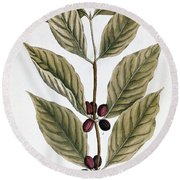 Coffee Plant, 1735 Round Beach Towel