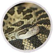 Coiled Rattlesnake Round Beach Towel