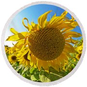 Colby Farms Sunflower Field Newbury Ma Ball Of Fire Round Beach Towel