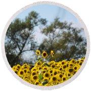 Colby Farms Sunflower Field Newbury Ma Standing Tall Round Beach Towel