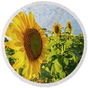 Colby Farms Sunflower Field Side Round Beach Towel
