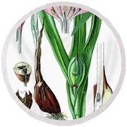 Colchicum Autumnale, Commonly Known As Autumn Crocus, Meadow Saf Round Beach Towel