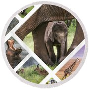 Collage Of Animals From Tanzania Round Beach Towel