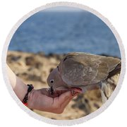 Collared Dove Feeding From A Hand Round Beach Towel