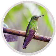 Colombian Hummingbird Round Beach Towel