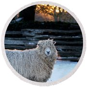 Colonial Sheep In Winter Round Beach Towel