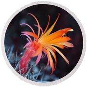 Colorful Cactus Flower Round Beach Towel