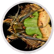 Colorful Cryptic Moth Round Beach Towel