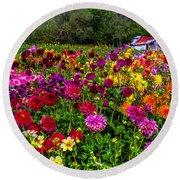 Colorful Dahlias In Garden Round Beach Towel